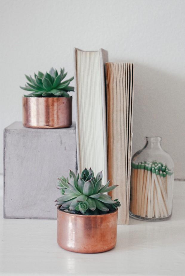 decora cada rincón con plantas