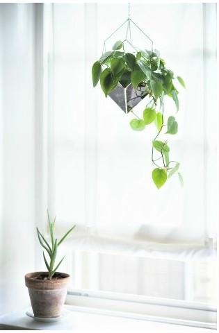 una de las cinco plantas que mejor purifican el aire según la NASA