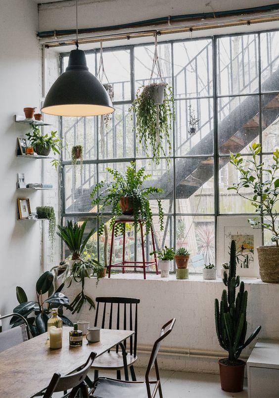 las plantas purifican el aire